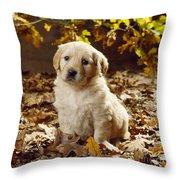 Golden Retriever Puppy Dog In Fallen Throw Pillow