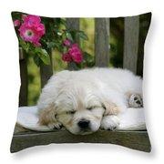 Golden Retriever Puppy Sleeping Throw Pillow