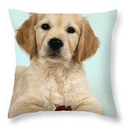 Golden Retriever Puppy With Rose Throw Pillow