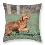 Golden Retriever Running Throw Pillow