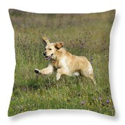 Golden Retriever Running Throw Pillow