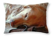 Golden Retriever Sleeping With Dad's Slippers Throw Pillow by Jennie Marie Schell