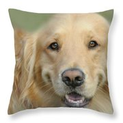 Golden Retriever Standard Throw Pillow by Diana Angstadt