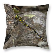 Golden-ringed Dragonfly Throw Pillow