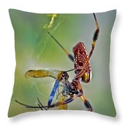 Golden Silk Orb With Blue Dragonfly Throw Pillow