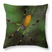 Golden Silk Spider 10 Throw Pillow