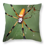 Golden Silk Spider Capturing A Stinkbug Throw Pillow