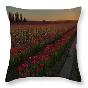 Golden Skagit Tulip Fields Throw Pillow