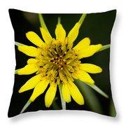 Golden Star Flower Yellow Salsify Glacier National Park Throw Pillow