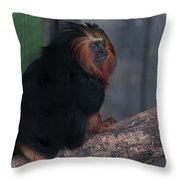 Golden Tamarin Throw Pillow