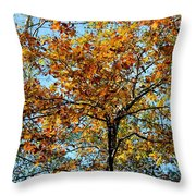 Golden Tree Lined Sky Throw Pillow