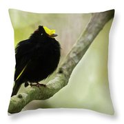 Golden-winged Manakin Throw Pillow