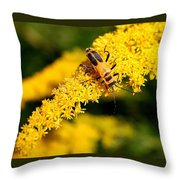 Goldenrod Beetle Throw Pillow