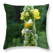 Goldenrod Crab Spider In Yellow Throw Pillow