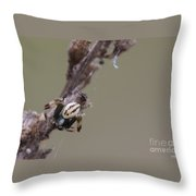 Goldenrod Crab Spider Male  Throw Pillow