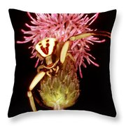 Goldenrod Crab Spider Throw Pillow