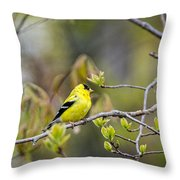 Goldfinch In Spring Throw Pillow