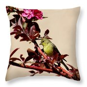 Goldfinch In Tree 031015aa Throw Pillow