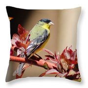 Goldfinch On Branch 031015aa Throw Pillow
