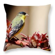 Goldfinch On Branch 031015aab Throw Pillow