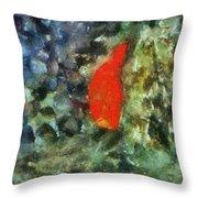 Goldfish Photo Art 05 Throw Pillow