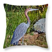 Goliath Heron By Water Throw Pillow