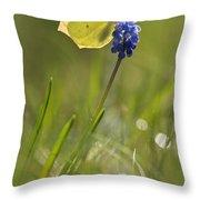 Gonepteryx Rhamni On The Blue Flower Throw Pillow