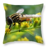 Good Guy Hoverfly  Throw Pillow
