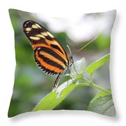 Good Morning Butterfly Throw Pillow