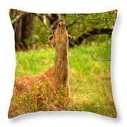 Good To The Last Leaf Throw Pillow