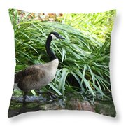 Goose Walking Back In For A Swim Throw Pillow