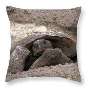 Gopher Tortoise Throw Pillow