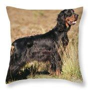 Gordon Setter Dog Throw Pillow