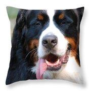 Gorgeous Bernese Mountain Dog Throw Pillow
