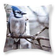 Gorgeous Blue Jay Throw Pillow