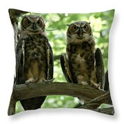 Gorgeous Great Horned Owls Throw Pillow