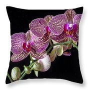 Gorgeous Orchids Throw Pillow