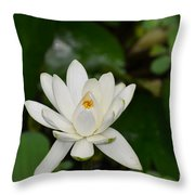 Gorgeous White Lotus Flower Blossom Throw Pillow