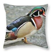 Gorgeous Wood Duck Throw Pillow