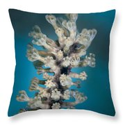 Gorgonian Throw Pillow