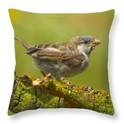 Gorrion House Sparrow Throw Pillow