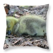 Gosling Napping  Throw Pillow