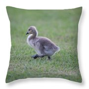 Gosling Stroll Throw Pillow