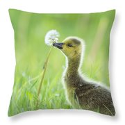 Gosling With Dandelion Throw Pillow