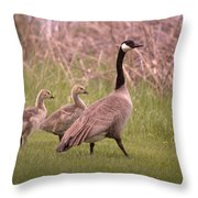 Goslings On A Walk Throw Pillow