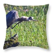 Got An Itch 4 Throw Pillow