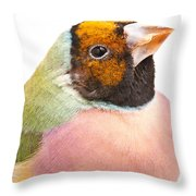 Gouldian Finch Erythrura Gouldiae Throw Pillow