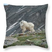 Gq Mtn. Goat Throw Pillow