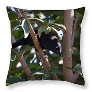 Grackle Stare Throw Pillow