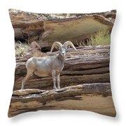 Grand Canyon Big Horn Sheep Throw Pillow